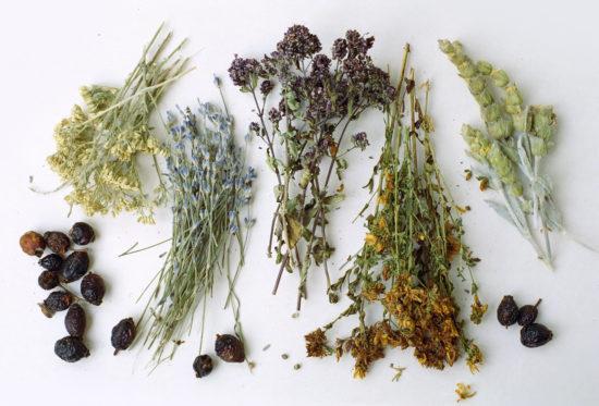 травы при першении в горле