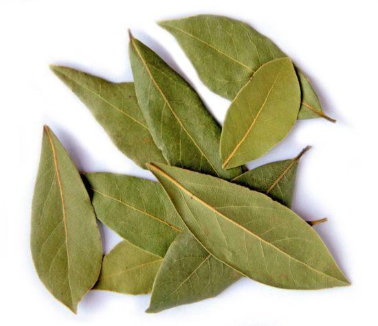 лавровые листья при гайморите